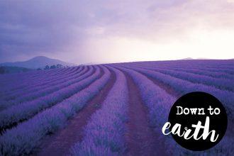 Eco Lifestyle und grün leben: Der Duft von Lavendel: Die Geschichte einer Heilpflanze