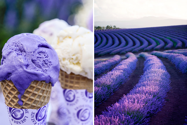 Peppermynta-Lavendel-Farm-Neuseeland-Bridgestowe_5