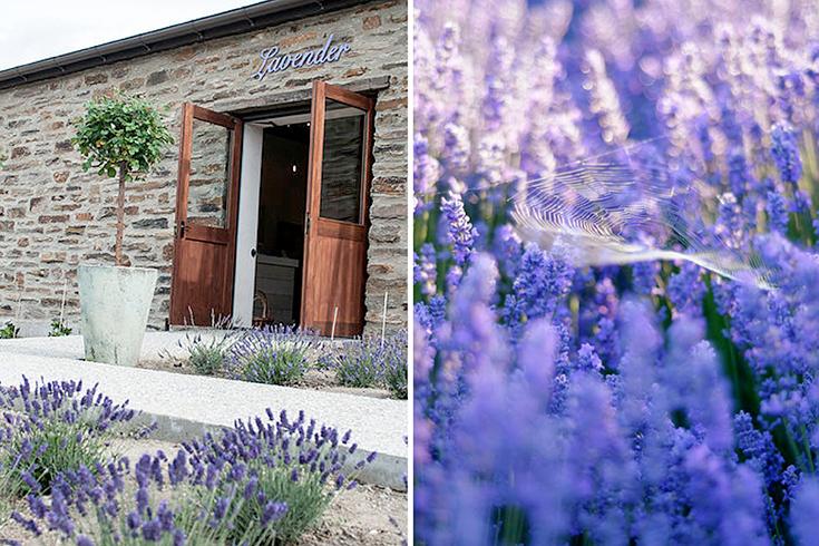 Peppermynta-Lavendel-Wanaka-Lavender-Farm-Neuseeland_1