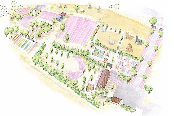 Peppermynta-Lavendel-Wanaka-Lavender-Farm-Neuseeland_2