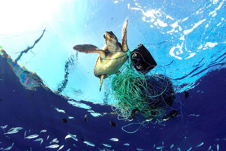 Peppermynta-Peppermint-Greenpeace-Naturschutz-Meer-Schildkröte-Plastik_1