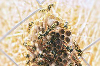 Eco-Lifestyle-Wespen-sind-wichtig-nützlich-wie-Bienen-Wabe