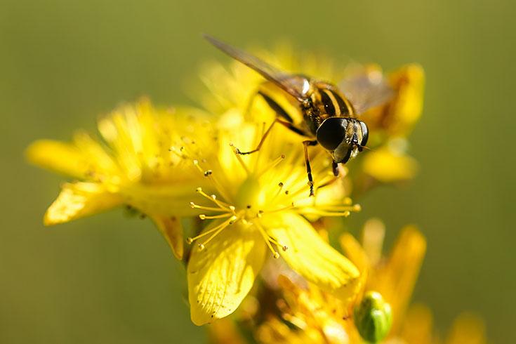 Eco-Lifestyle-Wespen-sind-wichtig-nützlich-wie-Bienen
