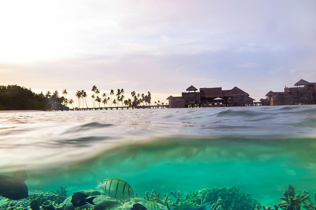 Eco-Lifestyle-Malediven-Eco-Luxury-Resort-Gili-Lankanfushi-Korallen-Bleiche-Sterben-Korallensterben