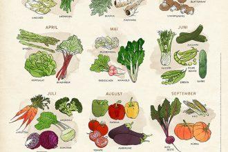 Eco Lifestyle: Greenpeace Poster – Gemüse der Saison