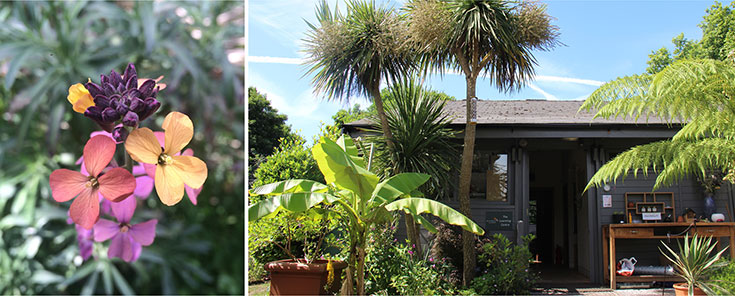 Eco-Lifestyle-Green-City-Guide-Tipps-London-Walworth-Garden