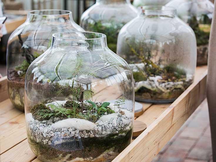 Ausflug in die Grüne Erde-Welt – Der ökologische Veranstaltungskalender, Mini Gewächshaus