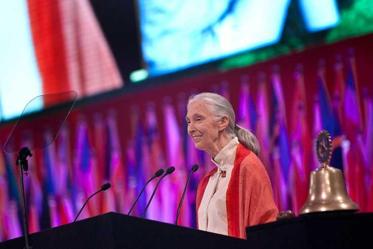 Reasons for Hope – ein Interview mit Primatenforscherin Jane Goodall