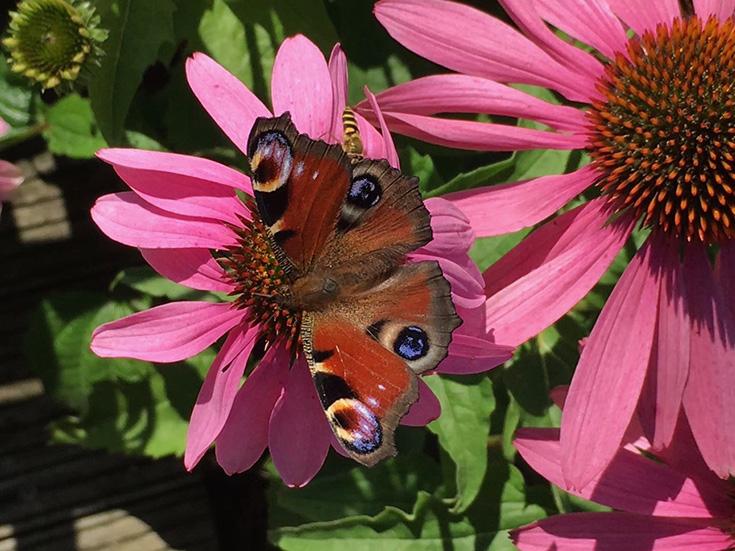 Cum Natura Permakultur – die ökologischste Landwirtschaft von morgen? Im Einklang mit der Natur, keine Monokultur: Schmetterling