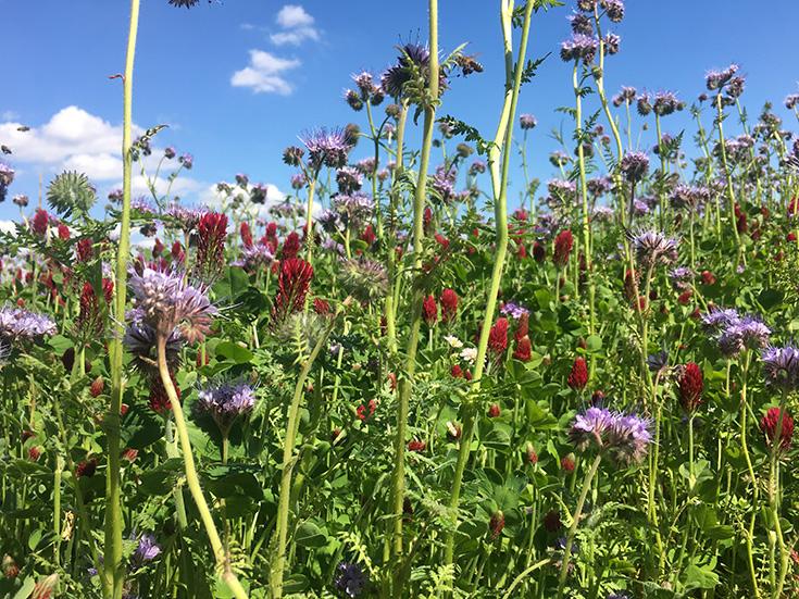 Cum Natura Permakultur – die ökologischste Landwirtschaft von morgen? Im Einklang mit der Natur, keine Monokultur