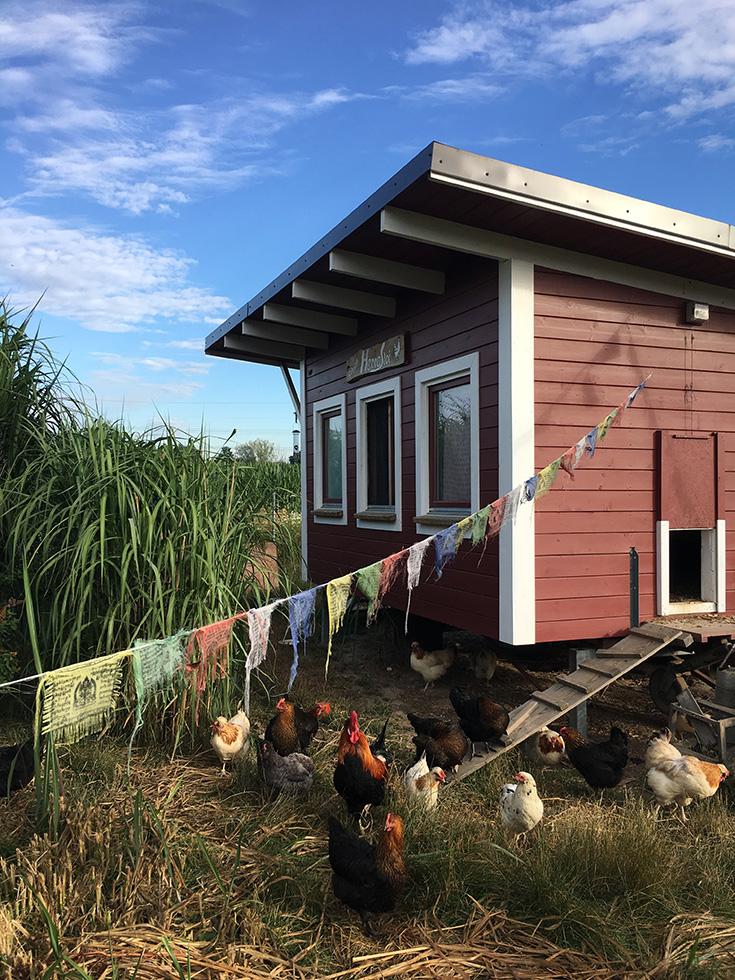 Cum Natura Permakultur – die ökologischste Landwirtschaft von morgen? Im Einklang mit der Natur, keine Monokultur: Hühner