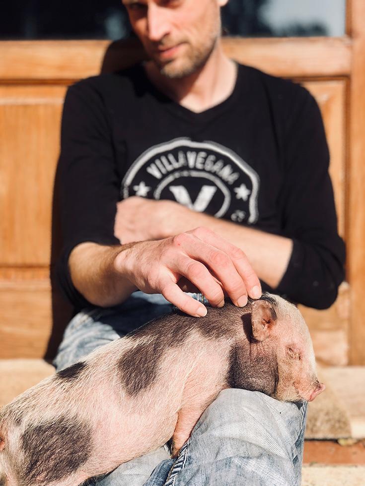 Villa Vegana – Das vegane Paradies auf Mallorca: Hotel und Restaurant, schwein, Ferkel