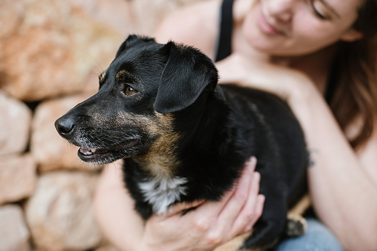 Villa Vegana – Das vegane Paradies auf Mallorca: Hotel und Restaurant, Hund