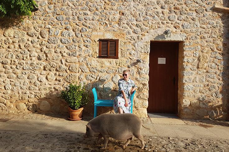 Villa Vegana – Das vegane Paradies auf Mallorca: Hotel und Restaurant, Jennifer Poppe, Schwein