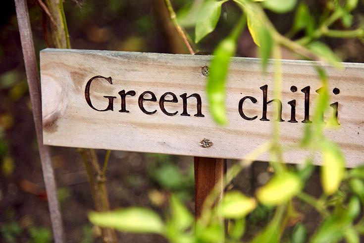 Peppermynta-Peppermint-Eco-Lifestyle-Gili-Lankanfushi-Malediven-Öko-Luxus-Resort-nachhaltig-reisen