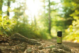 Primavera ätherische Baumöle – Waldbaden (Shinrin Yoku) für Zuhause: Fichtennadeln sibirisch, Lärche, Zirbelkiefer, ätherisches Öl