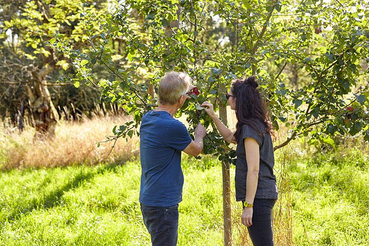 Voelkel Bio Säfte – warum Streuobstwiesen, Saatgut und alte Apfelsorten Kulturgut sind