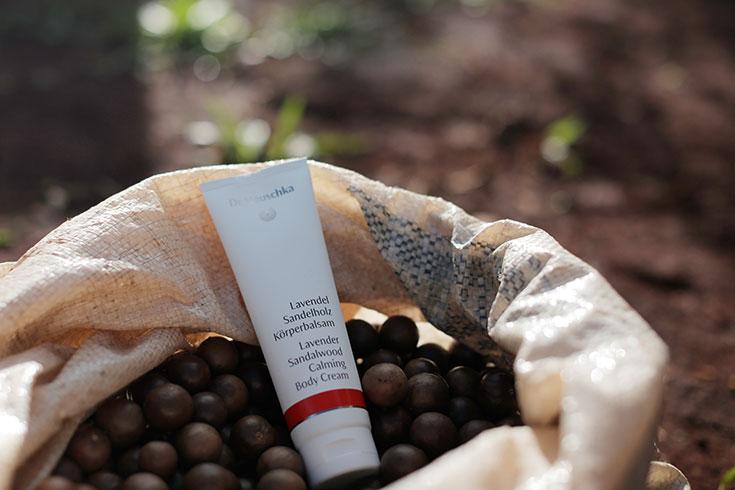 Dr Hauschka Wir Verlosen 3 Naturkosmetik Sets Mit Macadamia