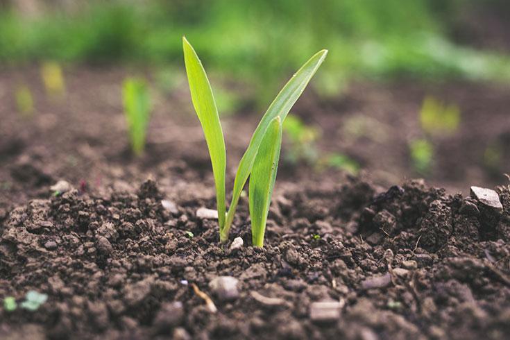Nitrat im Grundwasser – warum konventionelle Landwirtschaft so schädlich ist