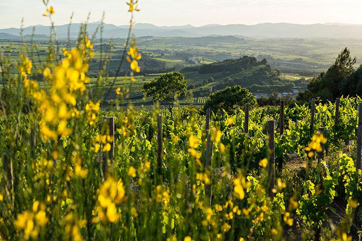 Delinat Bio Wein – Alles was du über nachhaltigen Weingenuss wissen mußt: Weinberg