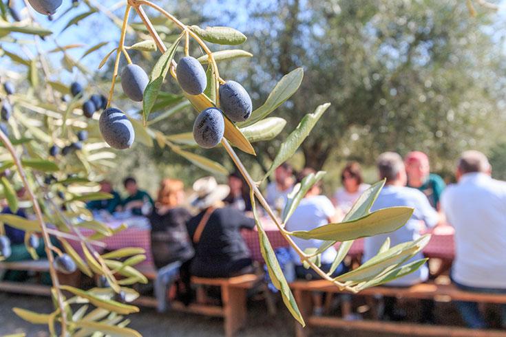 Fattoria La Vialla Onlineshop – Bio Lebensmittel und Bio Produkte aus Italien (Toskana), biodynamische und ökologische Landwirtschaft. Bio-Wein, Öko Lebensmittel, Bio Spezialitäten, Demeter zertifiziert, Oliven, Bio Olivenöl
