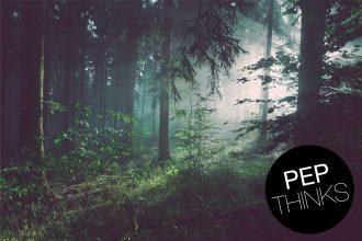 Treedom Kritik – warum wir keine Kooperation mit dem Baumpflanz-Portal und Aufforstungsprojekt eingehen wollten. Greenwashing für Grokonzerne und Global Player? Ist Bäume pflanzen, Bäume verschenken ein moderner Ablasshandel?